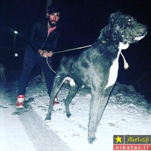 سگ سرابی بزرگ
