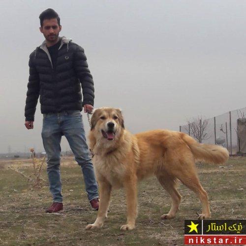 عکس سگ سرابی