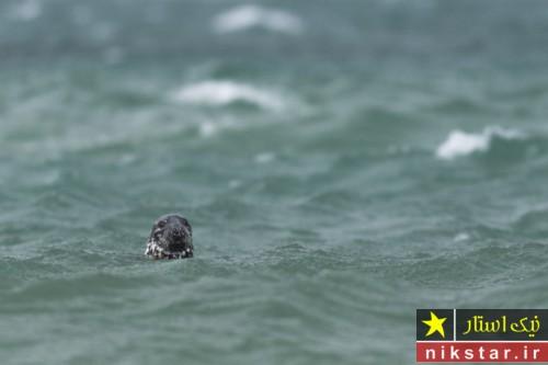 برندگان مسابقه عکاسی حیات وحش