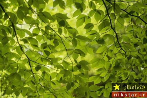 شرایط نگهداری از درخت نارون
