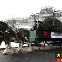 عکس هایی از آوردن درخت کریسمس به کاخ سفید