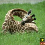 عکس های دیدنی و بامزه از حیوانات در هنگام خواب