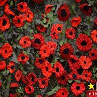 عکس های زیبا از گل های خشخاش قرمز به یاد قربانیان جنگ جهانی اول