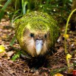 عکس حیوانات و پرندگان عجیب در حال انقراض جهان