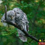 عکس های عاشقانه از بوسه و بغل حیوانات در طبیعت