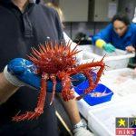 """موجودات عجیب و غریب در """"آب های عمیق اقیانوس ها """"+ تصاویر"""