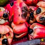 چند نوع مواد غذایی در جهان که سمی و خطرناک می باشند