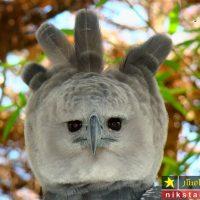 عکس حیوانات عجیب و وحشتناک در جهان