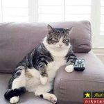 عکس های بامزه از رفتار و حرکات بامزه گربه های خانگی
