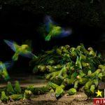 عکس های حیوانات منتخب برندگان عکاسی حیات وحش در سال ۲۰۱۸
