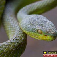 جانوران و حیواناتی با قدرت خارق العاده در جهان + تصاویر