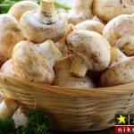 ۱۰ روش نگهداری قارچ برای مدت طولانی و نحوه سفید کردن قارچ