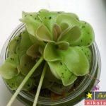 ۱۶ روش موثر جهت از بین بردن پشه گلدان – رفع پشه گلدان
