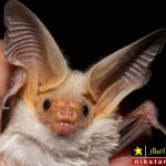 فواید لانه خفاش – خواص لانه خفاش و تجارت میلیونی لانه خفاش